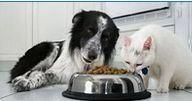 Cani e Gatti: Come scegliere la loro alimentazione